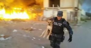 Han risikerer livet for å redde en hund fanget i et inferno.
