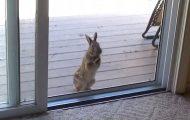 Denne ville kaninen BER om å få komme inn, men bare etter å ha sett DETTE i stuen.