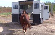 Hest med knust hjerte går inn i denne traileren, men se hvor de kjører.