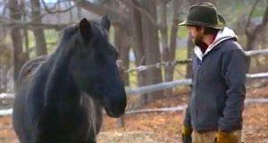 De kaller denne hesten et ondskapsfullt monster. Så kommer en fremmed og målbinder alle!