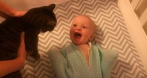 Denne babyen møter en katt for første gang. Reaksjonen hennes? Jeg SMELTER.