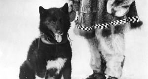 For 91 år siden reddet denne modige hunden en hel by! Hvordan? Dette er helt utrolig…