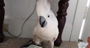 De fortalte fuglen sin at han skulle til dyrlegen, og reaksjonen hans er den beste noensinne.