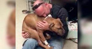 Han ble utnyttet som kamphund i ett år. Det eneste han vil da han reddes er å få en klem.