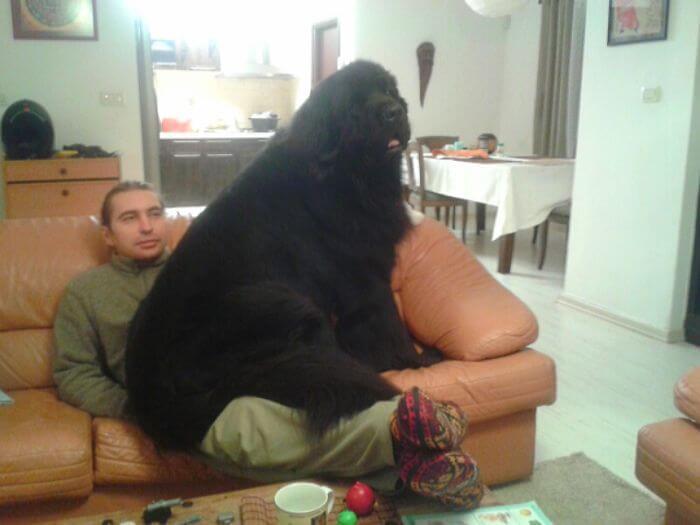 store-hunder (1)