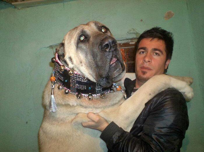 store-hunder (14)