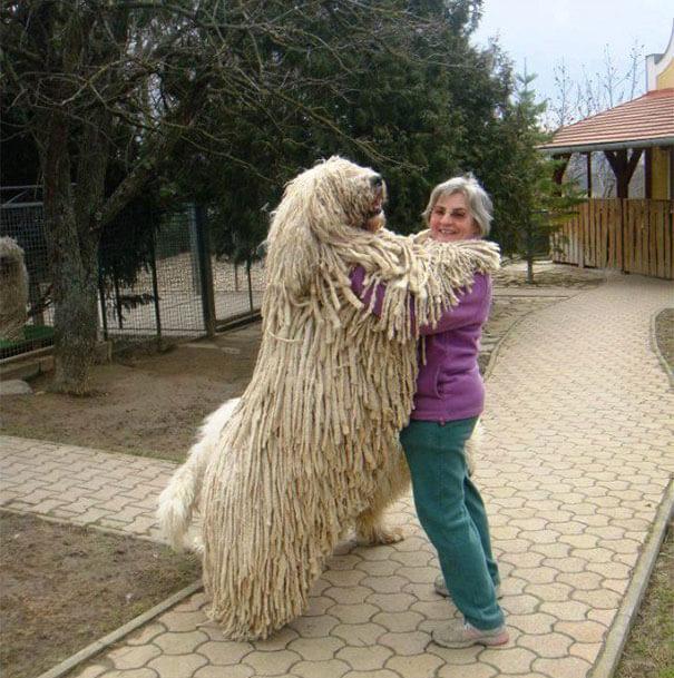 store-hunder (5)