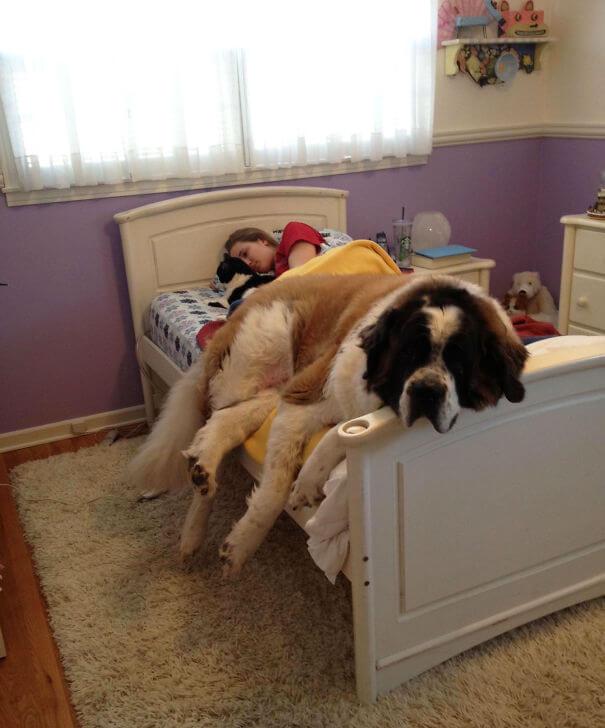 store-hunder (9)