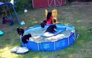 De 6 bjørnene snek seg inn i familiens hage for å ha et pool party. Se det fantastiske klippet.