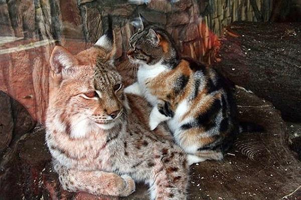 katt-gaupe2