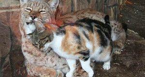 En hjemløs katt snek seg inn i dyreparken på utkikk etter mat. Det hun fikk i stedet? Jeg smelter.