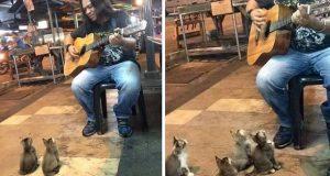 Gatemusikanten ble ignorert av folk. Så kom disse 4 musikkelskende kattungene for å høre på ham.