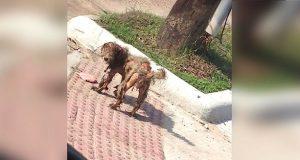 Dette løshund-bildet florerte på nettet. Ved en nærmere titt, fant noen hennes UTROLIGE hemmelighet.