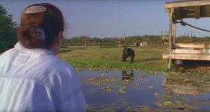 Kvinnen har ikke sett disse sjimpansene på 18 år. Men se hva som skjer når hun kommer nærmere…