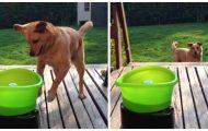 Denne over-entusiastiske hunden beviste akkurat at han trenger ingen mennesker for å kaste ball.