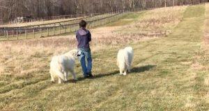 Kvinnen er ute på tur med hundene sine. Men se hvem som slår følge med dem.