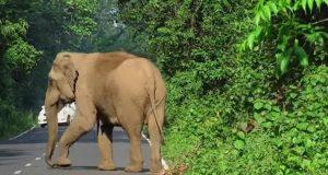 En elefant blokkerer veien. Grunnen? Følg med i buskene til høyre.