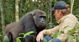 Han oppdro gorillaen som en sønn og satte ham fri. 5 år senere, ser han ham mellom trærne…