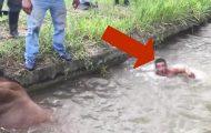 De prøver å hjelpe denne hesten før den drukner. Så svømmer plutselig denne mannen bort til den.