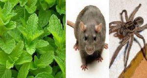 Har du denne planten i hus, vil du aldri mer se mus, edderkopper eller andre insekter igjen.