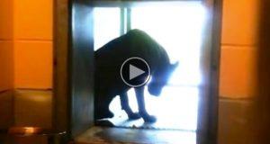 Hver dag sitter denne hunden alene i bilvaskehallen. Så dukker en fremmed opp og gjør DETTE.