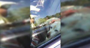 Politimannen blir rasende når han ser noen gjøre DETTE mot hunden sin. Se hva han gjør med det.