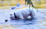 Han slapp pitbullene sine løs i elven. Det de fant fikk meg til å gape.