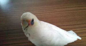 Denne hysterisk morsomme fuglen hater å spise brokkoli og er ikke redd for å vise det.