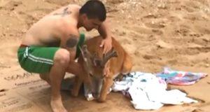 Han drar en skjelvende hjort opp fra vannet. Men følg med når han legger den på sanden…