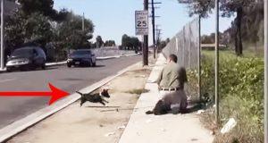 Han bestemmer seg for å fange en liten valp. Men hold et øye med hundemoren.