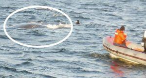 En hval kom like ved båten og kikket på dem fra vannet. Så ser han det… Wow.