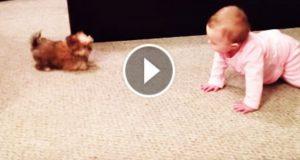 De prøver å filme babyen sin. Men se opp for hunden når de begynner å filme. Jøss.