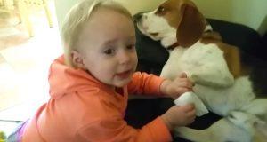 Hva denne lille jenta gjør med sin hunde-bestevenn vil få hjertet ditt til å eksplodere.
