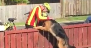 Skjult kamera fanget opp at postmannen gjorde DETTE med «farlig» hund. Nå spres opptaket på nettet.