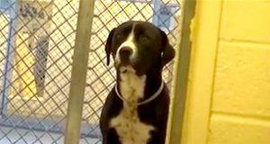 Hunden ser på i sorg når de andre får seg nye hjem. Men se hva som skjer når det er hans tur.