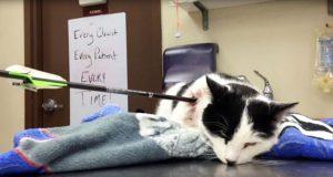 Noen skjøt denne vennlige katten med en pil, men det han gjør hos veterinæren er dypt rørende.