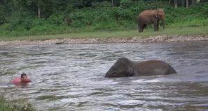 Denne elefanten prøver å redde en mann hun trodde var i ferd med å drukne.
