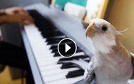 Så snart musikken starter, åpner denne fuglen nebbet og gjør noe uventet.