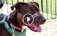 Redningsmenn gir mishandlet hund den BESTE dagen i hennes liv. Reaksjonen hennes? Rent GULL.