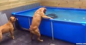 Se disse hundenes prikkfrie løsning for å hente opp favorittleken sin fra bassenget.