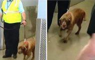 Militærhund blir revet bort fra sin kjære sersjant. To år senere hører hun ham rope hennes navn…