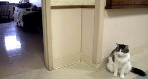 Katt som bor på et pleiehjem sjokkerer sykepleierne når de oppdager hans uvanlige evne.