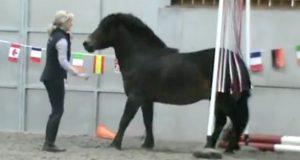 Hestehvisker redder en nervøs ponni som skulle avlives og gjør den til verdensmester.