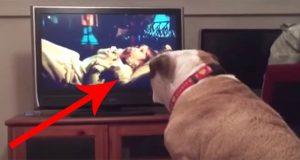 Denne bulldogen ser en skrekkfilm – hvordan hun reagerer når hun ser en liten jente i fare?