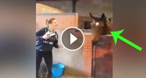 Hesten ser sin eier danse. Men hans neste trekk fikk meg til å le meg skakk! UTROLIG.