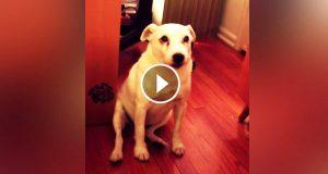 Matmor konfronterer hunden for å ha lagd et rot. Men jeg kunne IKKE tro det neste hunden gjorde.