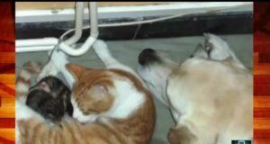 Katt fødte et kull med små kattunger. Så kom hunden bort og gjorde DETTE? Wow.