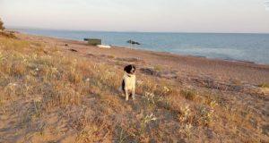 Ensom løshund med «stolt sjel» oppsøker en fremmed og stjeler hjertet hennes.