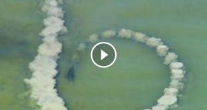 Delfin lager en sandsirkel og venter. Sekunder senere fanges dette fenomenet opp.