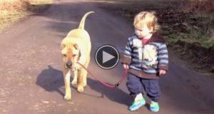 Denne lille pjokken er ute og lufter hunden sin. Det neste som skjer? Jeg smiler fra øre til øre.